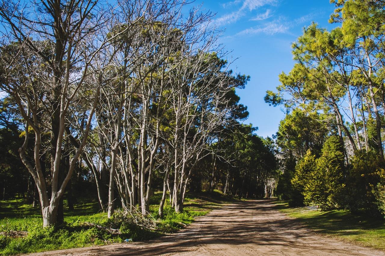 Cariló: un bosque junto al mar